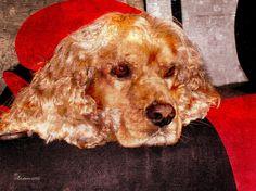 Cocker Spaniel Digital Art by EricaMaxine Price - Cocker Spaniel Fine Art Prints and Posters for Sale