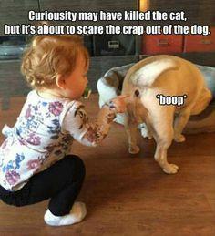 Tooo Funny!!! #uglydogsfunny