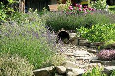Jaro je ideální čas pro založení bylinkové zahrádky, která vás bude těšit po celé léto i další roky. Vyberte pro ni vhodné místo, připravte půdu a pak už jen s radostí sejte a sázejte…
