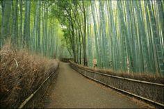 京都 嵯峨野の竹林が荘厳すぎるwwwwwwwwwww:ハムスター速報