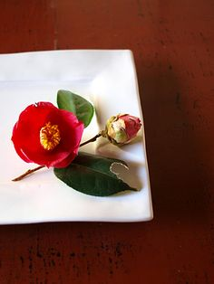 tsubaki / camellia