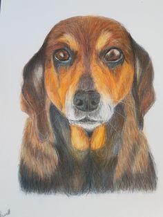 Coloured Pencils, Landscape, Portrait, Artwork, Dogs, Painting, Animals, Color, Art Work