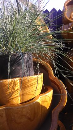 Green Maiden Grass Ornamental Grasses, Serving Bowls, Green, Plants, Planters, Bowls, Plant, Planting