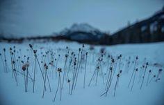 """No cabe duda: el Instagram de Lubezki merece un Óscar propio.   27 Imágenes extraordinarias de """"The Revenant"""" tomadas por Lubezki"""