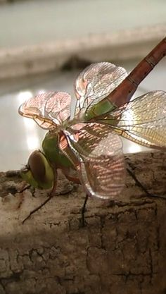 In Sweden, folklore suggests that dragonflies come around to check for bad souls - to weigh souls to be more 'accurate'.