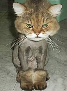 this cat is not grateful for his new Ugg boots