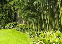 """Résultat de recherche d'images pour """"haie de bambou"""""""