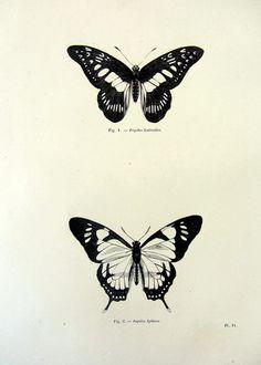 Stampa 1860 Beautiful farfalle depoca, antichi insetti originali incisione, piastra di lepidotteri papillon, storia naturale delle farfalle.