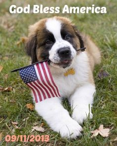 In remembrance of all the people who died and the heroes who risked their own lives - both human and canine.   God Bless America.
