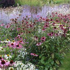 Echinacea, eryngium yuccifolium and perovskia late summer combination