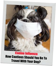 Canine Influenza: How Cautious Should You Be to Travel With Your Dog