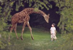 Giraffe Composite. Dream Maker photoshoot