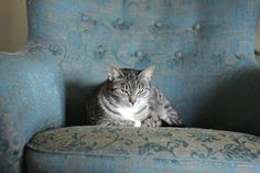Björkbacka: Olen onnistunut opettamaan kissoille, että kun lem...