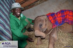 Kamok getting ready for bed Bedtime, Baby, Elephants, Animals, Kenya, January, Alone, Night, Animales