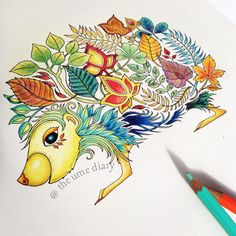 Colouring Enchanted Forest