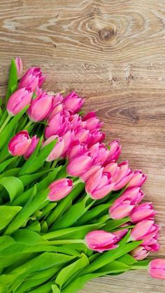 Tulips - My site Pink Tulips, Tulips Flowers, Flowers Nature, My Flower, Spring Flowers, Planting Flowers, Beautiful Flowers, Spring Wallpaper, Flower Wallpaper
