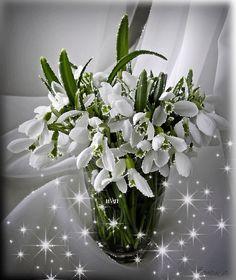 Beautiful Flowers Images, Beautiful Flowers Wallpapers, Beautiful Gif, Flower Images, Flower Pictures, Wallpaper Nature Flowers, Flowers Gif, Exotic Flowers, Flower Wallpaper