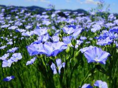 Bio-Lein Plants, Nature, Plant, Planting, Planets
