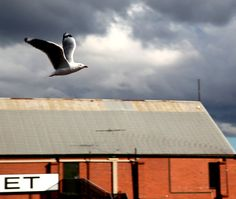 Seagull flying over the roof. by Awes Amin