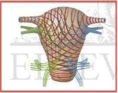 Pregnancy uterine anatomy netter ligament - Google Search | Anatomy ...