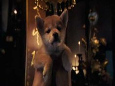 Hachiko - Goodbye -I'm a shibaholic and this is one of my favorite books