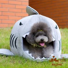 Colorfulhouse Shark Pet House Bed = Looks cool and cosy. They also have different colors and sizes available.
