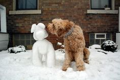 Kisses for the snowdoodle