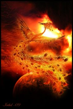 Google Image Result for http://fc06.deviantart.net/fs71/i/2009/341/1/8/Phoenix_by_Iribel.jpg
