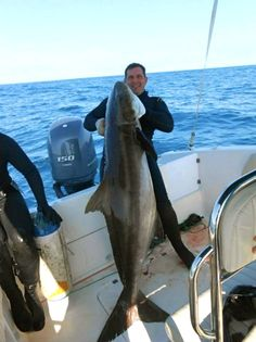 Enormous cobia speared off Brazil nearly 30 pounds heavier than record
