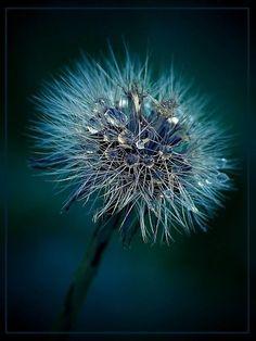 Make a Wish ~