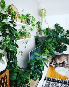 #plantsanddogs