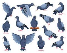 Bird Drawings, Cartoon Drawings, Animal Drawings, Cute Drawings, Gravure Illustration, Bird Illustration, Graphic Design Illustration, Pigeon Ramier, Feral Pigeon