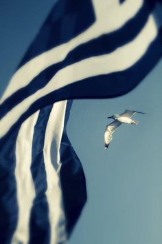 The Greek Flag.Glory to our country! Santorini, Mykonos, Greek Flag, Go Greek, Paros, Albania, Greek Culture, Greece Travel, Greek Islands