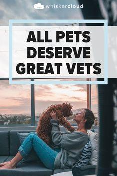Custom Veterinary Websites, SEO, and Cloud Hosting Veterinarian Quotes, Marketing, Pets, Animals, Animales, Animaux, Animal, Animais, Animals And Pets