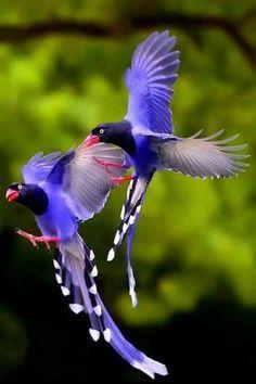10 Best Birds Images Birds Pet Birds Beautiful Birds