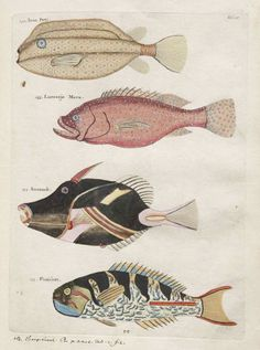 nickyskye meanderings: Wandering around the Museum of Natural History's rare book images online