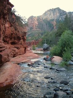 Stopping for a Zen moment in Oak Creek Canyon by the creek