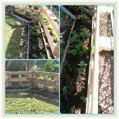 WellyMel: Getting stuck into the garden Using pallets