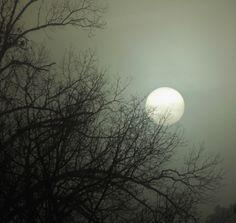 Foggy morning sun, it was so foggy it made the sun look like the moon.