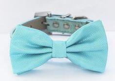 [Dog collar ], [ Pet wedding accessory], [pet store], [LA Dog Store]