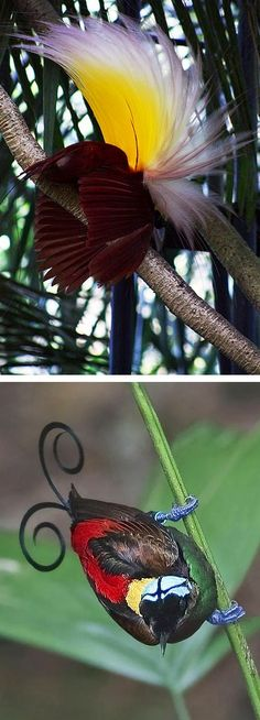 The Bali Bird of Paradise / exotic bird