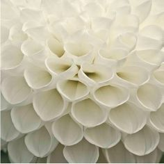 Form/texture and shades of white. Patterns In Nature, Textures Patterns, White Flowers, Beautiful Flowers, Rose Flowers, Origami, For Elise, Moon Garden, Shades Of White