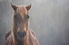 awesome shot of horse in rain
