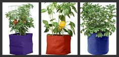 garden supplies, grow bags, colorful, tomatoes, peppers, potatoes, vegetables