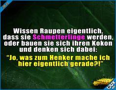 Ich bau einfach mal weiter! ^^  #Schmetterling #Raupe #lustig #Sprüche #lustigeSprüche #Jodel #Humor