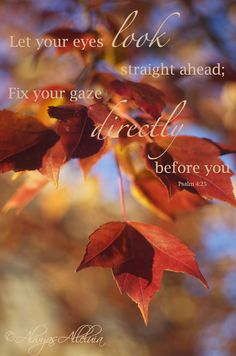 Psalm 4:25 ~ Let your eyes look straight ahead, fix your gaze directly before you...