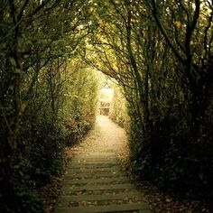 this tree lined path is amazing