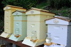 multiple hive stand | Different color hives jazz up the apiary, but they also can help to ...