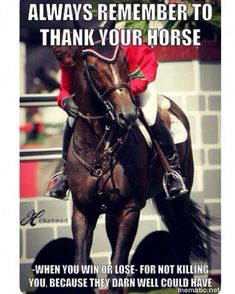 Funny Horse Memes, Funny Horses, Cute Horses, Horse Love, Beautiful Horses, Funny Animals, Horse Girl, Horse Humor, Beautiful Cats