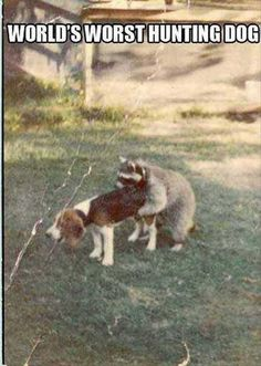 This Coon Dog is a great example of how it sometimes feels like being a RE Agent.